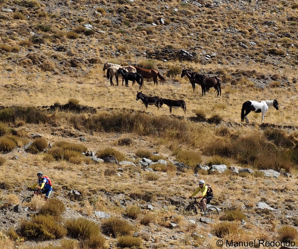 Horses and donkeys grazing in the national park Sierra Nevada as cyclists are crossing