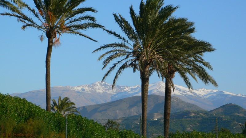 vue sur le sierra nevada avec neige et palmiers