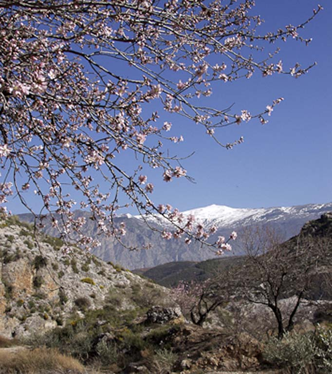 spring view onto the sierra nevada with snow granada province