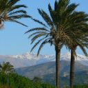 view sierra nevada mountains with snow and palmtrees granada