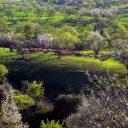 chèvres dans paysage de printemps malaga pres du torcal