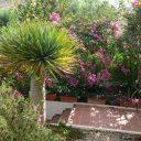 almeria cabo de gata las negras vakantiehuis casa los olivos tuin