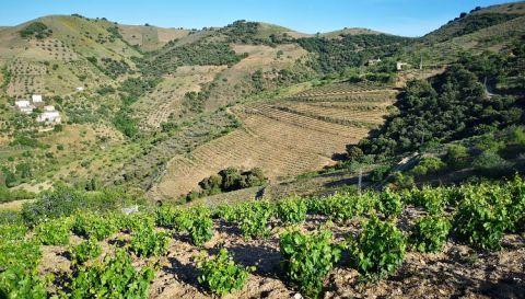 Vista de la montaña bodega centenaria Alpujarra