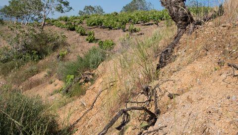 raíces largos viñas garcias de verdevique